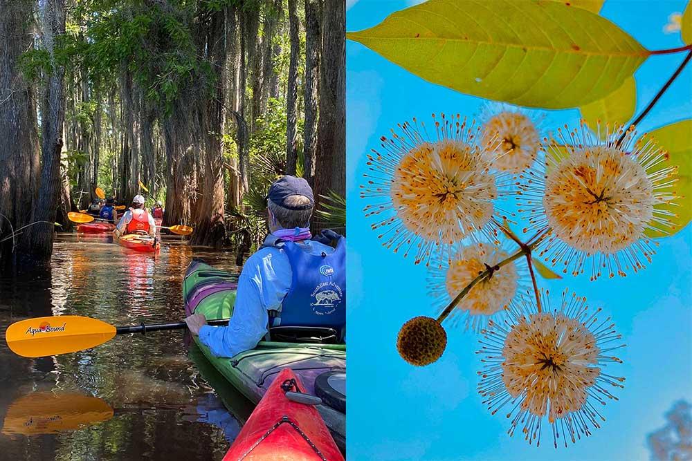 June 2020 Cathead Creek Paddle Trip