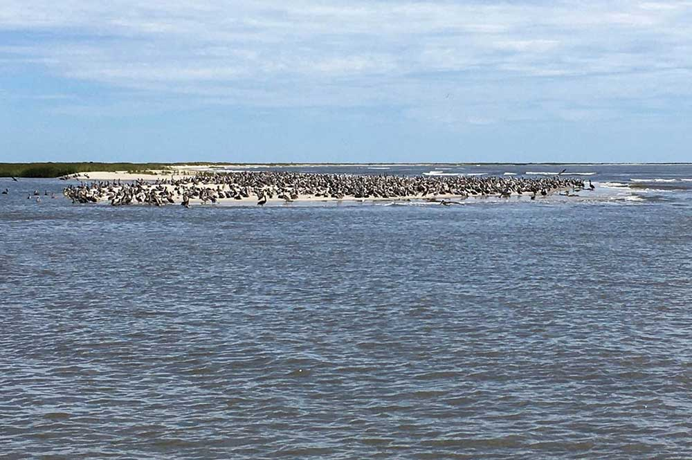 September 2020 Shorebirding Boat Trip